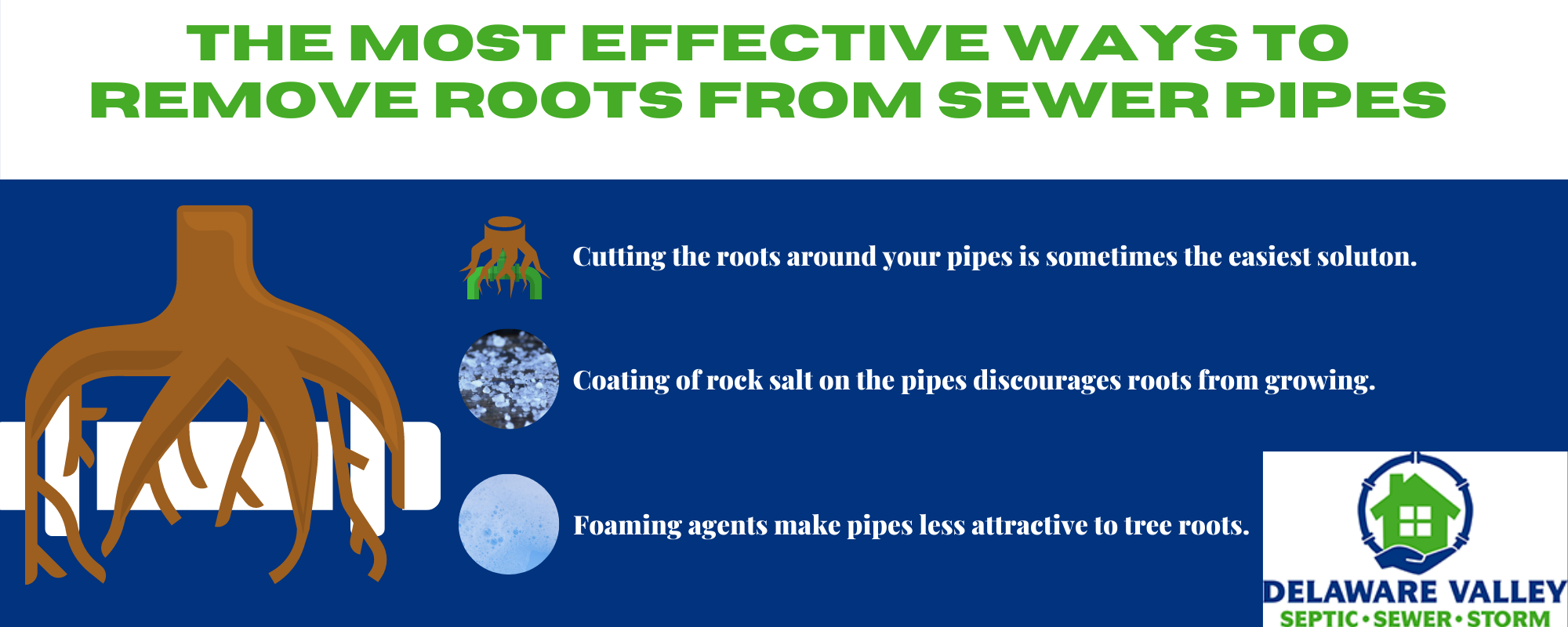 Infographic showing how to remove roots from sewer pipes.